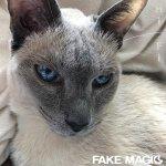Fake Magic's entertaining indie rock debut is no illusion