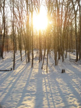 Scattered Shadows on Snowy Sunscapes