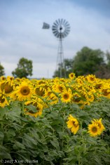 A field of sun...flowers.