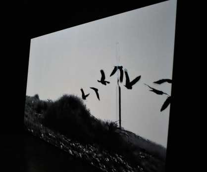 The start of the film. Cockatoos flying across the screen.