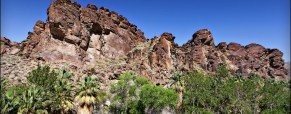 Palm Springs Vacation:  Hiking in Indian Canyon