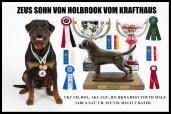 2015 Dog Show Goals