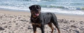 A Trip To Walton Rocks Beach Dog Park