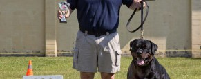 The 2015 Central Ontario Rottweiler Klub Sieger (CORK)