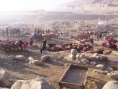 Viehmarkt am südwestlichen Stadtrand von Kabul. Foto: Thomas Ruttig (2005).