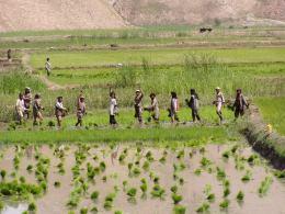 Reisbauern in Baghlan.