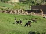 Gehöft und Weide im Fuladi-Tal in der Provinz Bamian. (Im Hintergrund getrocknete Dungfladen zum Heizen.)