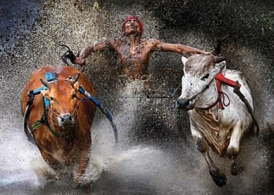 Wei Seng Chen, Malaysia Pacu Jawi Bull Race, Indonesia - World Press Photo 2013