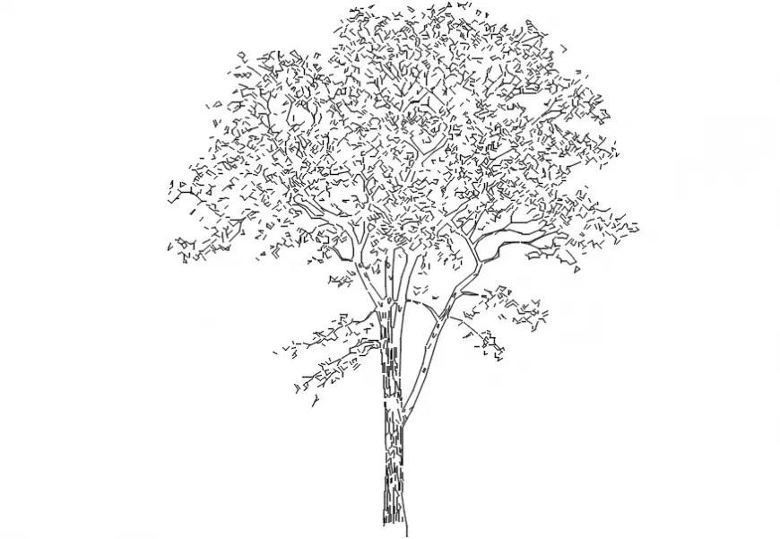 Simple tree elevation block cad drawing details dwg file