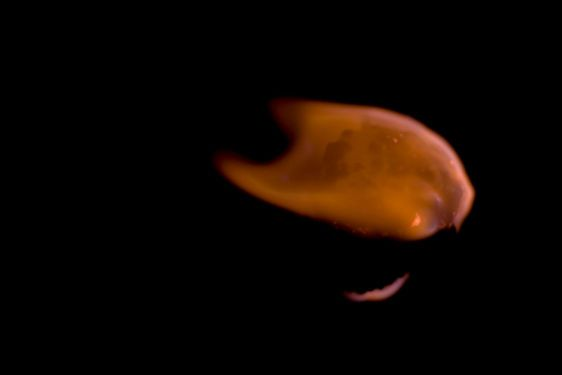 flaming marshmallow by lindsay
