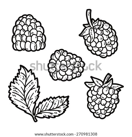 Vector Illustration Ripe Raspberry Isolated Vector Stock