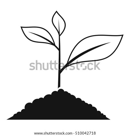 Progression Plant Growth Cultivation Seeds Sprouts Stock