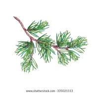 Christmas Tree Branch Conifer Pine Tree Stock Illustration ...