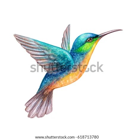 hummingbird stock royalty-free