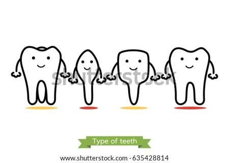 Dental Numbering Of Teeth Diagram Dental Tooth Chart