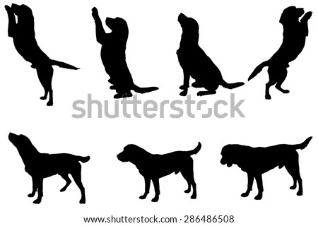Labrador Silhouette Stock Images, Royalty-Free Images