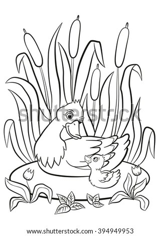 Coloring Pages Kind Duck Little Cute Stock Vector