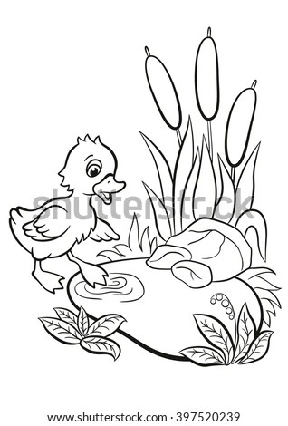 Coloring Pages Little Cute Duckling Tries Stock