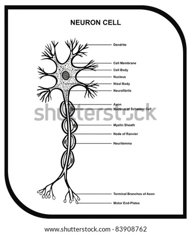 Myelin Sheath Stock Images, Royalty-Free Images & Vectors