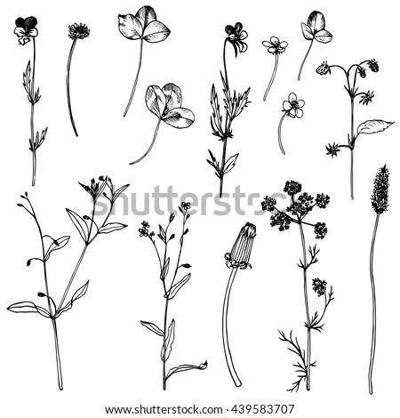Meadow Flowers Stock Images, Royalty-Free Images & Vectors