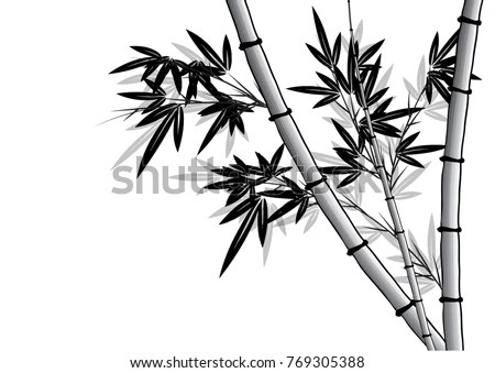 Decorative Bamboo Branches Isolated On White Stock Vector