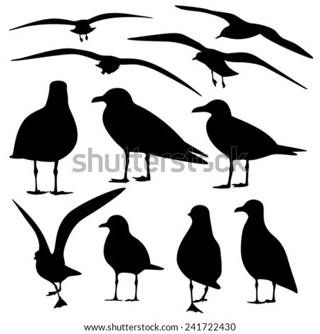 Collection Isolated Seagull Silhouette Stock Photos
