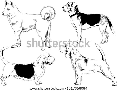 Dachshund Dog Stock Images, Royalty-Free Images & Vectors