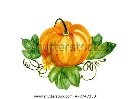 watercolor pumpkin stock