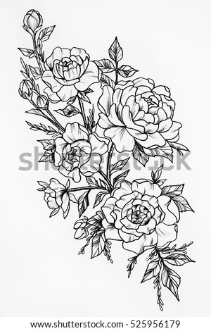 Black White Sketch Three Big Beautiful Stock Illustration