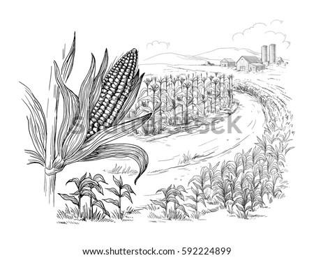 Hand Drawn Vector Illustration Sketch Rural Stock Vector