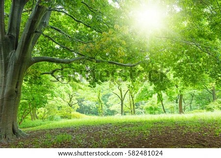 Outdoor Background Stock Images RoyaltyFree Images
