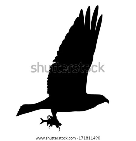 Fish eagle Stock Photos Images Pictures Shutterstock