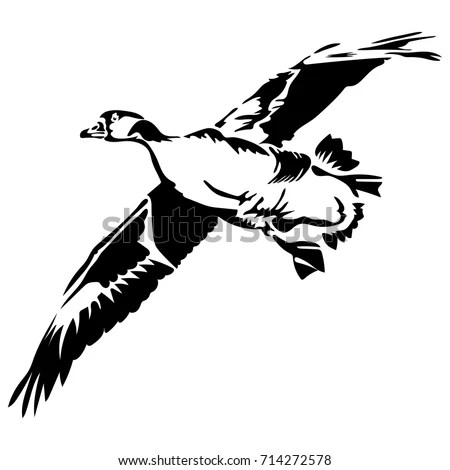 Vector Drawing Series Monochrome Sketches Birds Stock