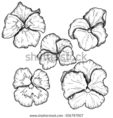 Black And White Pansies Stock Photos, Royalty-Free Images