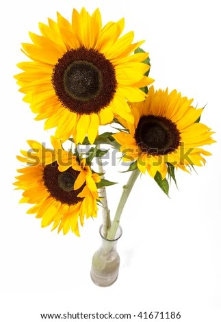 vase with sunflowers stock