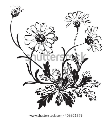 Isolated Blooming Meadow Flower Form Print Stock Vector