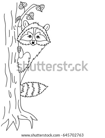 Raccoon In Tree Stock Images, Royalty-Free Images