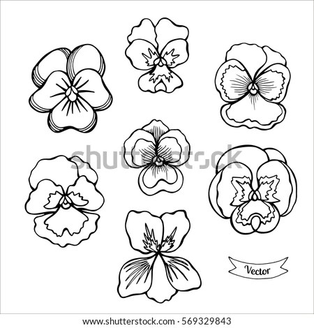 Pansy Flower Vector Set Various Viola Stock Vector