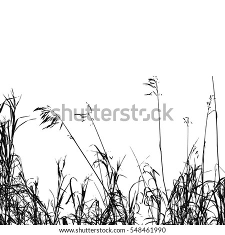Wheat Field Background Black Silhouettes Isolated Stock