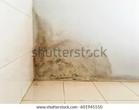 Mold ceiling after water leak Leak in ceiling when it rains