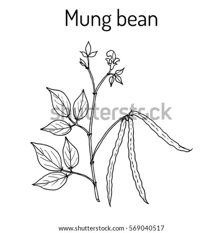 Mung Stock Images, Royalty-Free Images & Vectors