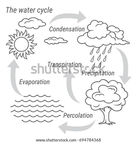 Water Cycle Diagram Stock Images, Royalty-Free Images