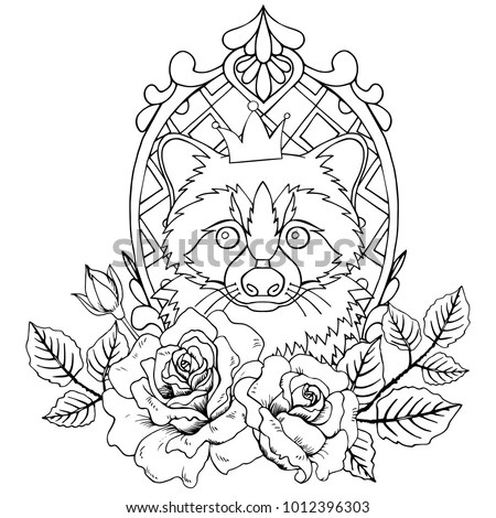Raccoon Stock Images, Royalty-Free Images & Vectors