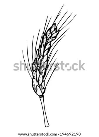 Vintage Patterns Hand Draw Illustration Wheat Stock Vector