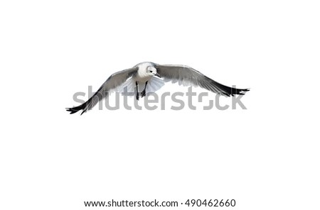 Flying Angels Stock Images, Royalty-Free Images & Vectors