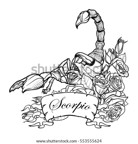 Scorpion Tattoo Stock Images, Royalty-Free Images