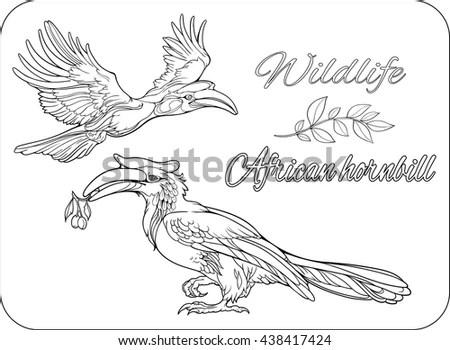 Parrot Tropical Bird Vector Illustration Coloring Stock