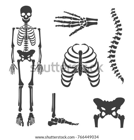 Skeleton Stock Images, Royalty-Free Images & Vectors