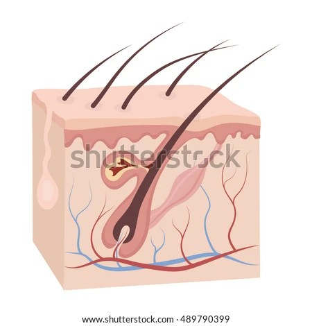skin cross section diagram wiring for air conditioning unit icon cartoon style isolated on stock vector 489790399 - shutterstock