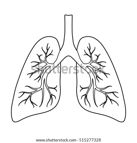 Bronchial Tree Stock Images, Royalty-Free Images & Vectors